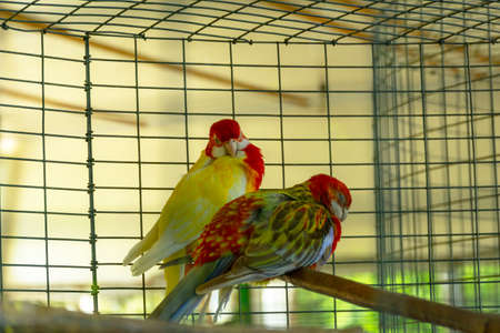 Cute colorful budgies in cage, outdoors. Colorful parrots in a cage Stockfoto