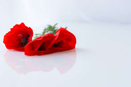 Poppies on a white background in selective focus. Beautiful bouquet isolated on a white background. The layout of the greeting card. Bright scarlet flowers. 版權商用圖片