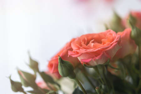 Delicate pastel roses close-up on a blurry light background. A fragrant bouquet of peach roses. Gift for birthday, wedding, Valentine's Day, Mother's Day. Soft focus, diffused light, copy space