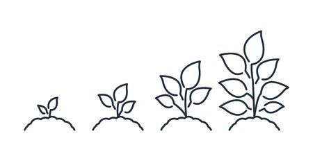 Seedling line icon. Plant growth. Vector icon.