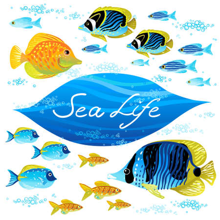 zebrasoma: Vector set of sea animals. Elements for design. Marine life. Collection of items for scrapbooking. Place for your text. It can be used for decorating of invitations, cards, decoration for bags and clothes. Illustration