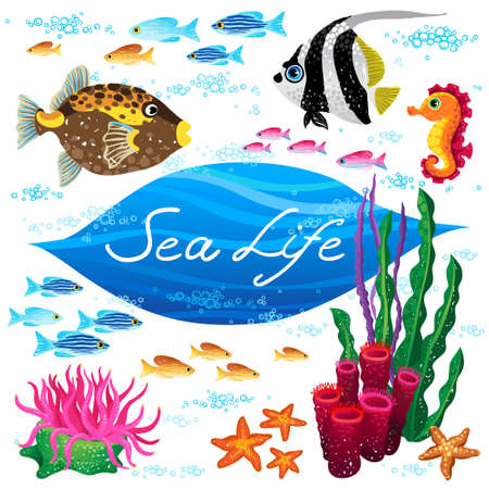 seaweeds: Vector set of sea animals and seaweeds. Elements for design. Marine life. Collection of items for scrapbooking. Place for your text. It can be used for decorating of invitations, cards, decoration for bags and clothes.