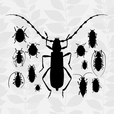 invertebrate: silhouette of bugs Insect on the background with gray leaves