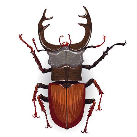 Stag kever Insect geïsoleerd op de witte achtergrond. Vector Illustratie