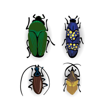 beetles: small beetles Insect isolated on the white background