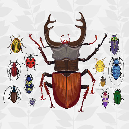 Bright set with colorful bugs Insect on the background with gray leaves Vector