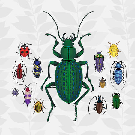 ground beetle: colorful bugs Insect on the background with gray leaves