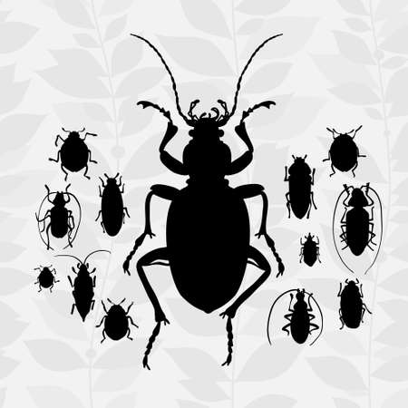 ground beetle: silhouette of bugs Insect on the background with gray leaves