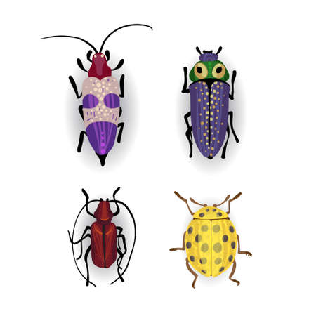 small beetles Insect isolated on the white background Vector