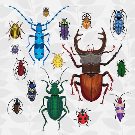 cartoon bug: Bright vector set with colorful bugs. Drawing of beetles. Insect on the background with gray leaves. Cartoon bug illustration. Illustration