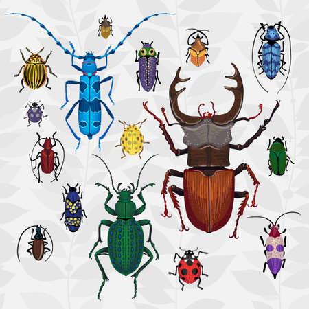 catarina caricatura: Vector brillante engastado con bichos de colores. Dibujo de escarabajos. Insecto en el fondo con hojas grises. Ilustración insecto de la historieta.