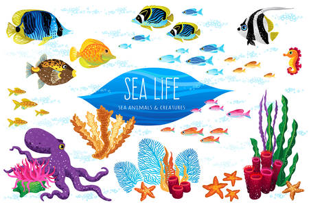 Vector set of sea animals and seaweeds. Elements for marine life design. Maritime characters for invitations, cards, decoration. Ocean pattern with colorful tropical fishes. Illustration for wallpaper.