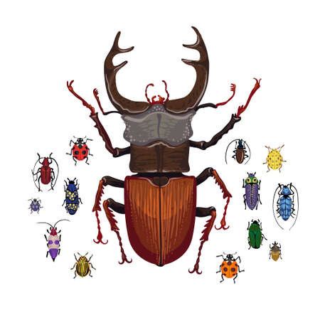 Vector set with stag beetle and small colorful bugs. Drawing of big brown beetle with horns. Insects isolated on the white background. Cartoon handdraw illustration.