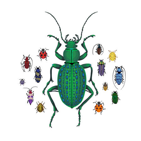 Vector set with Ground beetle and small colorful bugs. Drawing of big brown beetle with horns. Insects isolated on the white background. Cartoon handdraw illustration.