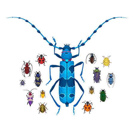 Vector set with Rosalia longicorn and small colorful bugs. Drawing of big brown beetle with horns. Insects isolated on the white background. Cartoon handdraw illustration.