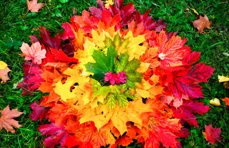background of autumn leaves Фото со стока