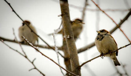 Sparrows on the branch