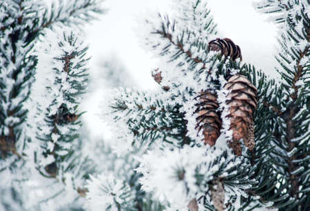 Pine branch with snow on it