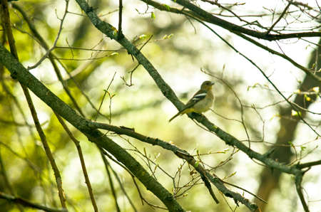 Titmouse bird witting on the branch