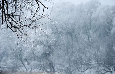 winter snowy background Фото со стока