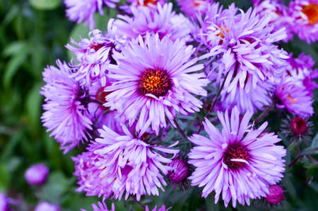 Wonderful picture of purple flowers close up