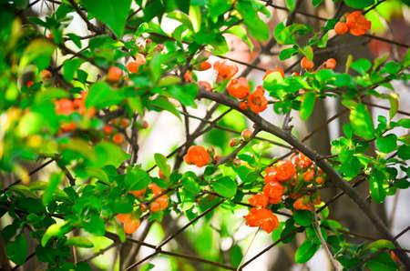 Orange flowers on the fence in sunlight Фото со стока