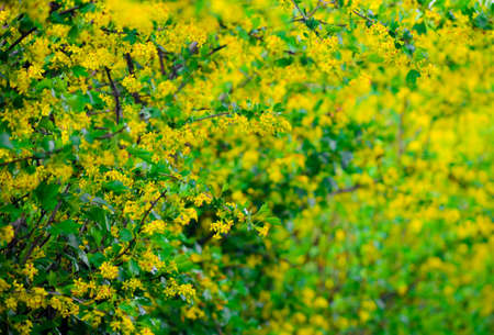 Yellow flowers on a background, a spring blossoming