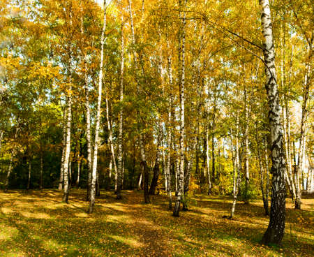 vivid colors of russian autumn in forest