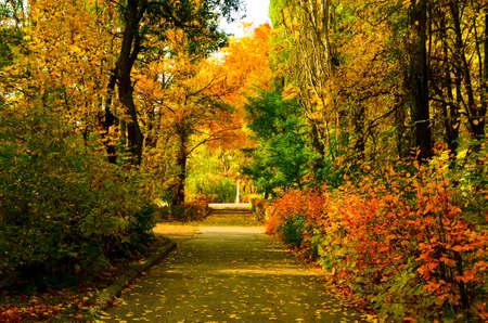 long road in autumn park between vivid bushes