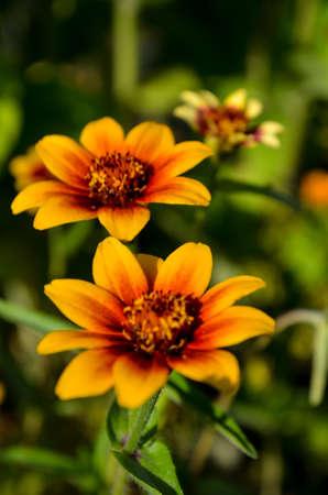 beautiful photo of bright orange-red flowers close up