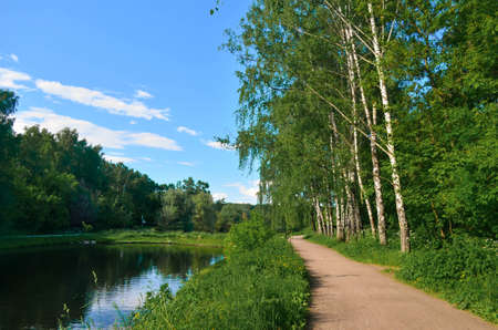 river bank near birch forest at sunny summer day