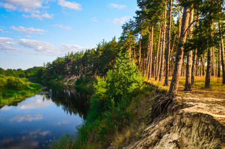 beautiful landscape of river near pine forest