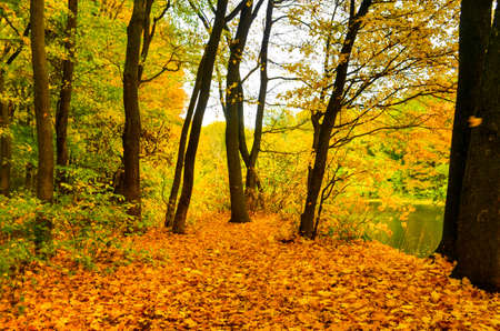 Golden autumn scene in a park, with falling leaves,