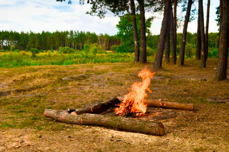 Fire in beautiful summer pine forest, Russia