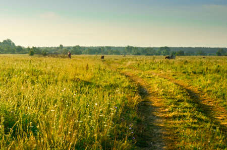 Countyside road in warm sunny morning, Russia