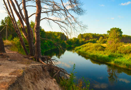 River bank near pine forest at sunny summer day