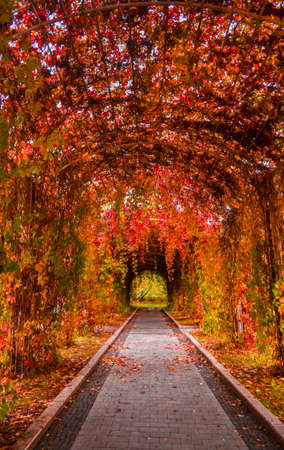Autumn alley with red, orange and yellow leaves in the park