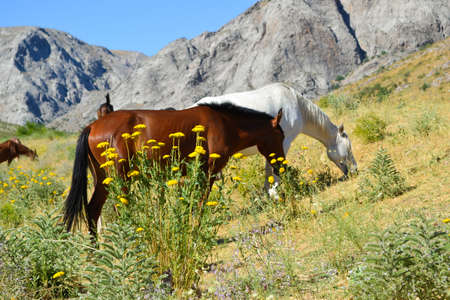 animal husbandry: Horses in the pasture