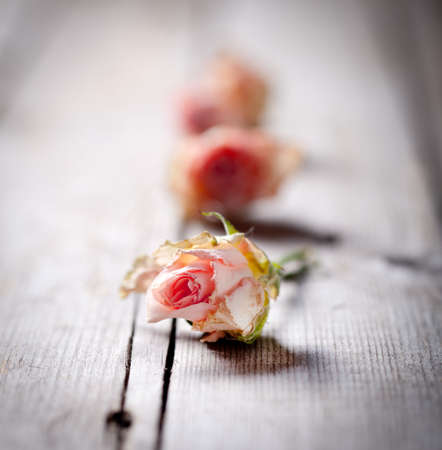 dilute: Dried rose buds on a wooden background