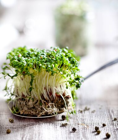 water cress: Water cress sprouts on a grey textile background Stock Photo