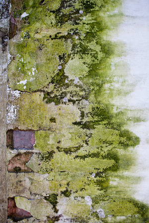 plaster mould: Old stone brick wall covered with whitewash, plaster with cracks and green mould