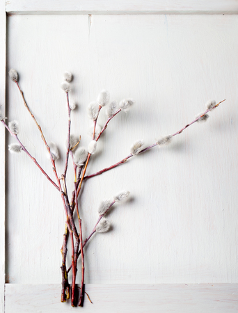 florecitas: Ramas de sauce sobre un fondo de madera blanca. Fondo de Pascua.