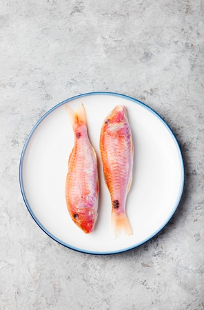 grey mullet: Raw fish, Red mullet fish on a white plate on a grey stone background.