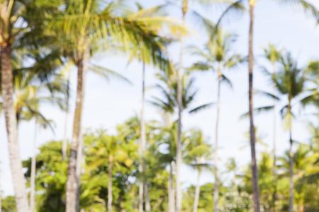 屋外の背景がぼやけて夏熱帯ヤシの木 写真素材
