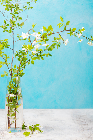 Cherry branches with fresh young leaves and flowers in a glass vase. Grey background. Copy space Banco de Imagens