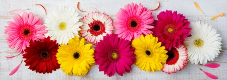 Colorful gerbera flowers on white wooden background. Top view. Copy space Stock Photo