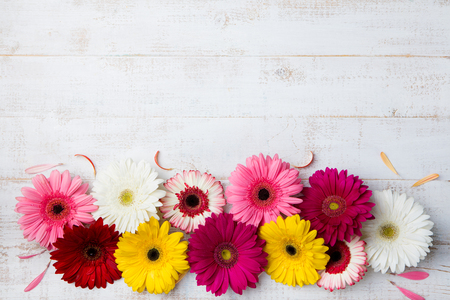 Kleurrijke gerberabloemen op witte houten achtergrond. Bovenaanzicht. Ruimte kopiëren