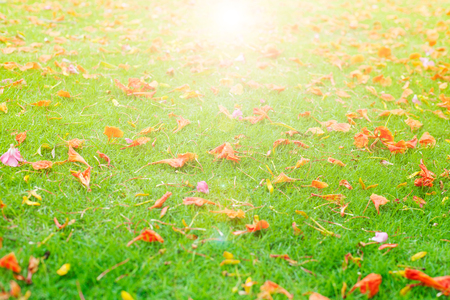 Colorful flowers on green grass in sunlight. Stock Photo