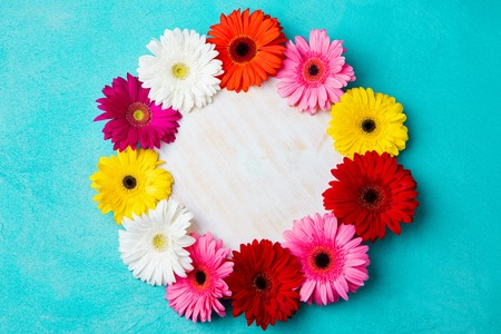 Colorful gerbera flowers on blue stone background. Top view. Copy space. Stock Photo