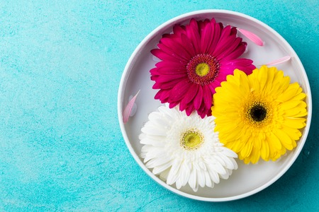 Colorful gerbera flowers floating in a bowl with water. Blue stone background. Top view. Copy space.